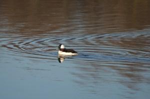11 29 13 Chesapeake Bch Marsh 057