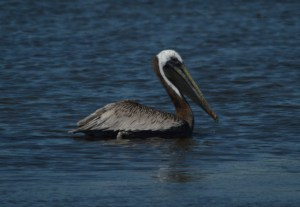07 18 14 Chincoteague 143
